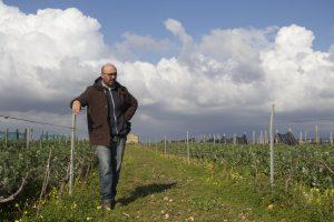 Nino Baracco - Wines maker near Marsala