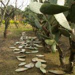 Salice Salentino Wine: Wines of Puglia in South Eastern Italy